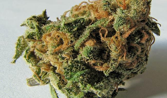 Cannabis, è ora di legalizzarla?