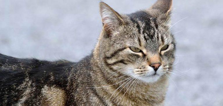 Scomparso il gatto torna a casa dopo 5 anni