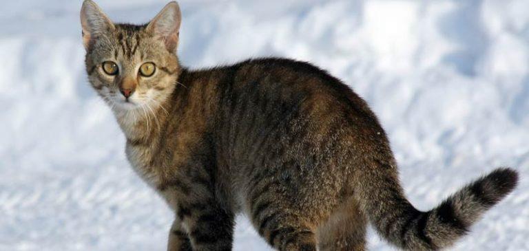 In Gran Bretagna la nuova carta di credito con la voce di un gatto