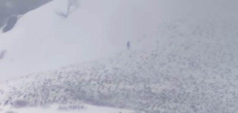 Misteriosa creatura avvistata sui monti dello Utah