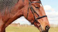 A caval donato non si guarda in bocca