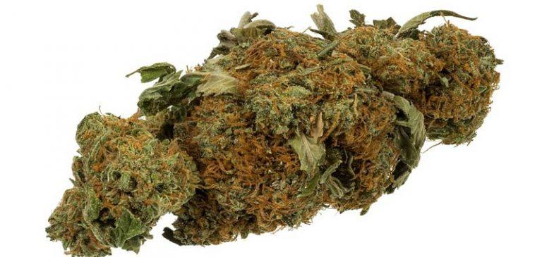 Matteo Salvini inizia la guerra ai negozi di Cannabis?