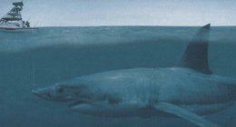 Megalodon sommozzatore trova denti di uno squalo gigante