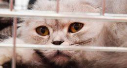 Aprilia gatto scuoiato e cucinato in un parcheggio