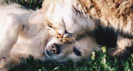 Cani e gatti quando applicare antiparassitario