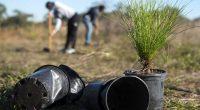 Filippine per laurearti devi piantere almeno 10 alberi