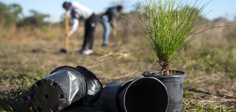 Filippine: per laurearti devi piantere almeno 10 alberi