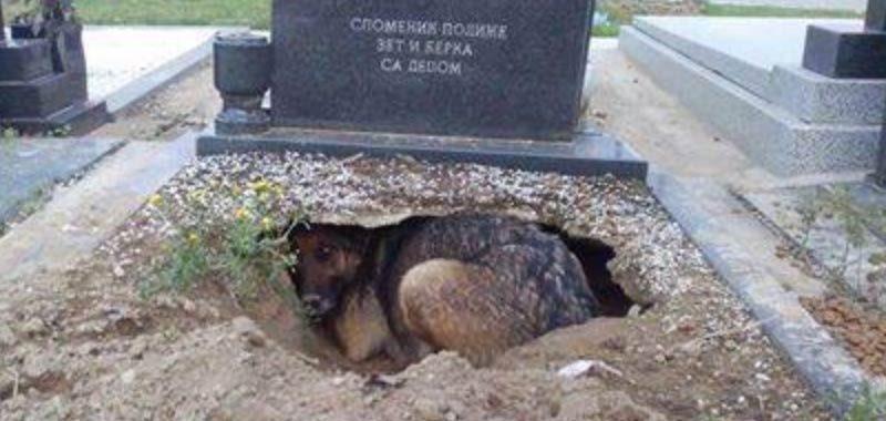 Svelato il mistero della foto del cane sulla tomba del padrone