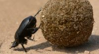 Scarafaggi gli insetticidi non riescono piu a ucciderli