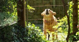 Uomo scomparso era stato mangiato dai suoi cani