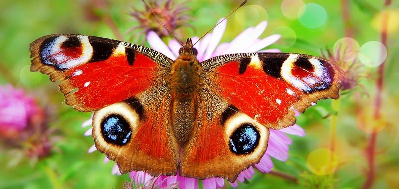 Vedi o sogni una farfalla Segna la tua metamorfosi spiriturale