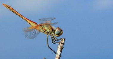 Hai notato una libellula Ecco il significato