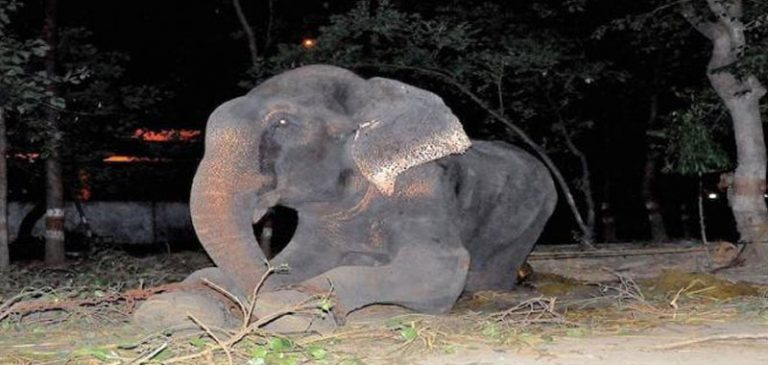 Viene liberato dopo 50 anni, Elefante piange come un umano