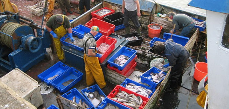 Allarme mercurio nel pesce decongelato