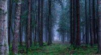 Bosco e foresta sono la medesima cosa