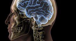 I mini cervelli gli scienziati sperimentano esistenza senza corpo
