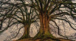 Ricercatori scoprono che gli alberi hanno battito cardiaco