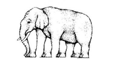 Test visivo Quante zampe vedi ne elefante