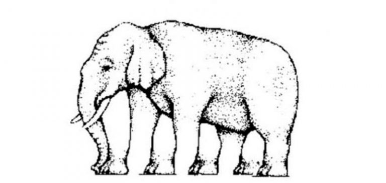 Test visivo: Quante zampe vedi nell'elefante?
