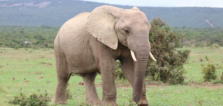 Elefante uccide turina in Namibia, shock