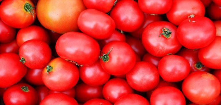 Il pomodoro è un frutto?