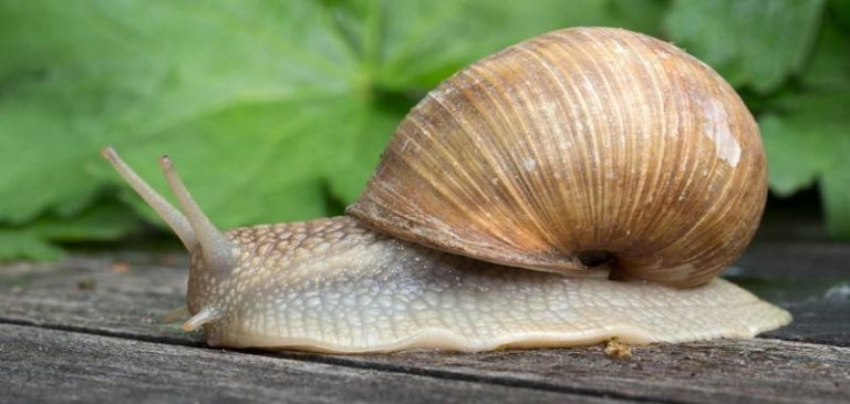 Qual è la differenza tra crostacei e molluschi?