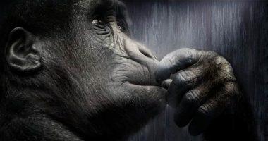 Voi lo sapete che la mente una scimmia impazzita