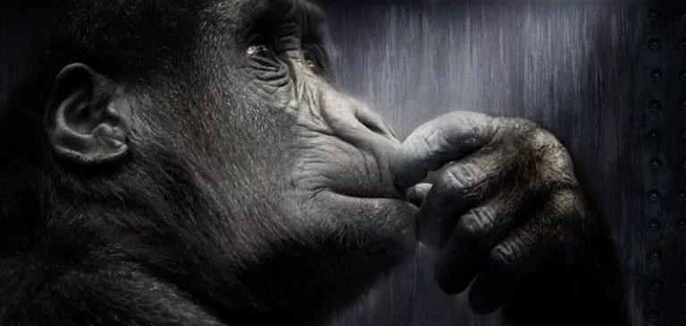 Voi lo sapete che la mente è una scimmia impazzita?
