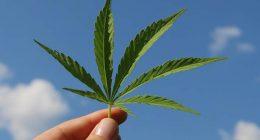 Cannabis nessun reato se la si coltiva in casa