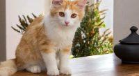 Gatto messo nel microonde postano il video sui socia