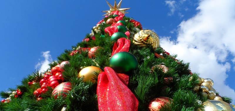 Guadagnano 15 euro ora per decorare alberi di Natale