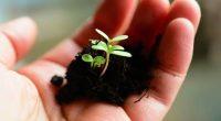 La scienza rivela Le piante urlano sotto stress