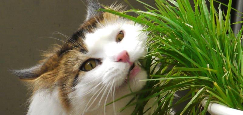 Le fusa del gatto aiutano a rafforzare le nostre ossa