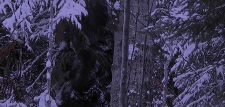 Canada strana creatura filmata accanto ad un albero