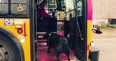 Cane prende da solo il bus per andare a giocare e tornare