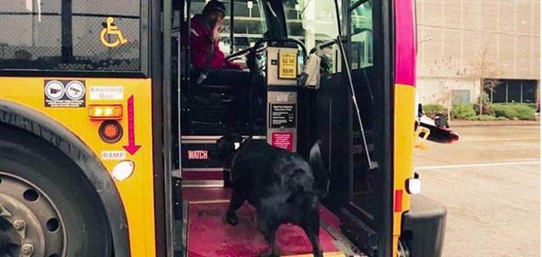 Cane, prende da solo il bus per andare a giocare e tornare