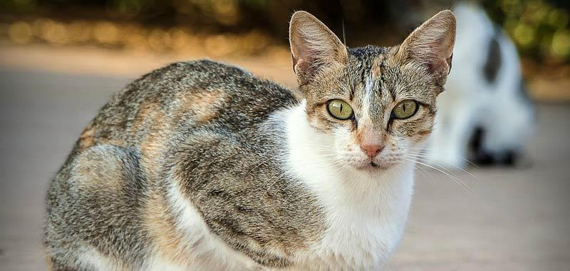 Chi ama i gatti va poco in chiesa lo dice uno studio