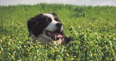 Perche i cani mangiano la terra