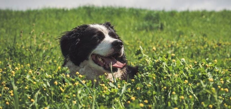 Perché i cani mangiano la terra?
