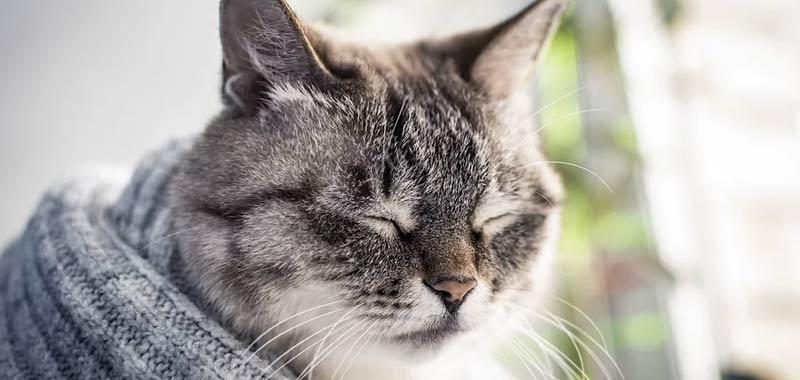Quali malattie possono trasmetterci i nostri gatti