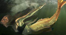 Scozia Nessun allevamento ittico per colpa delle sirene