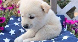 Sverminazione fondamentale farla nei cuccioli di cane