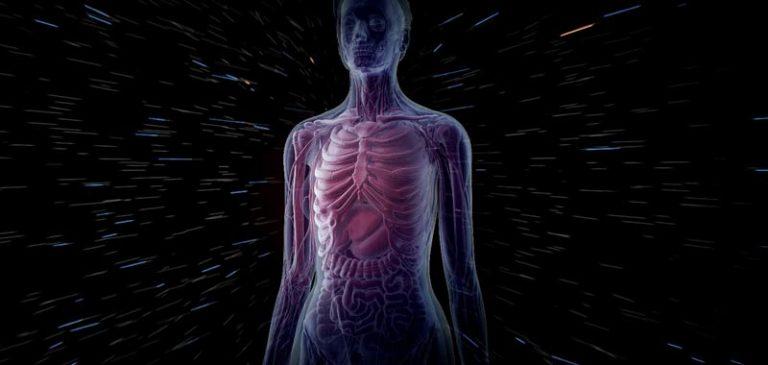 L'appendice è un organo inutile?