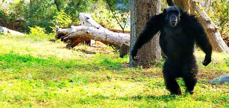 L'ascesa delle scimmie si sta compiendo come nel film?