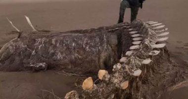 Carcassa del mostro di Loch Ness un sondaggio mostra la verita