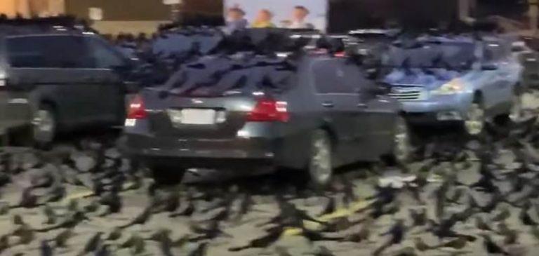 Incredibile invasione di uccelli, presagio di imminente disastro