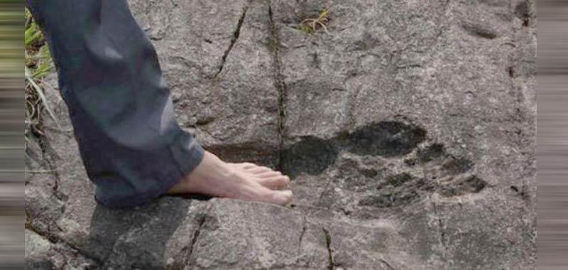 Nuova Zelanda Ritrovate orme giganti impresse nella roccia