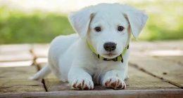 Il tuo cane e il tuo gatto non possono diffondere il coronavirus