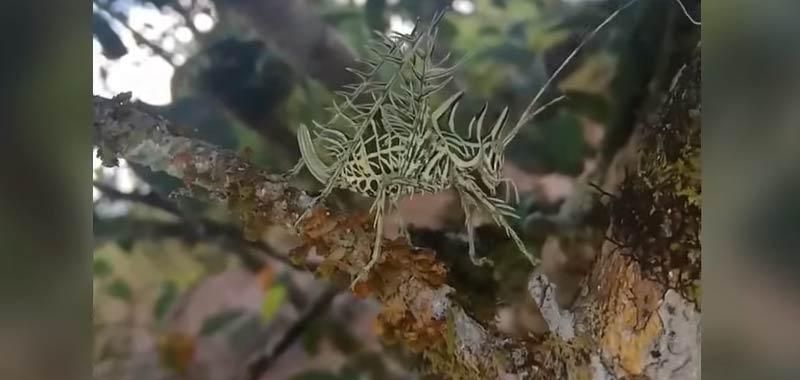 Stranissima creatura filmata in Costa Rica