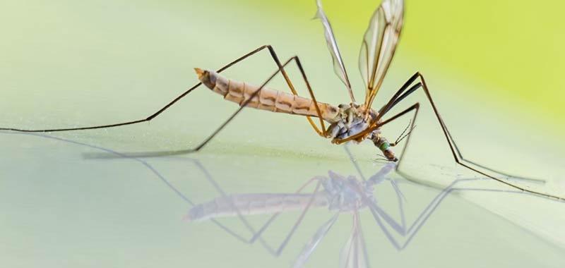 Estate in arrivo le zanzare possono diffondere il coronavirus